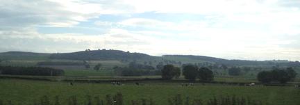 Cowsagain